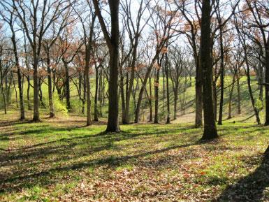 krenger 110210 kettle oaks