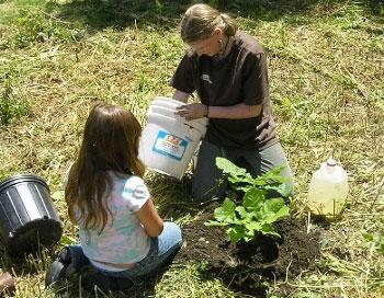 oak planting pic
