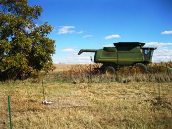 101212 corn harvest smaller