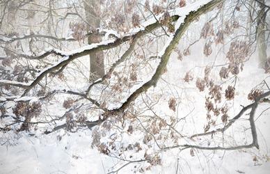 moreland weers snow 2012