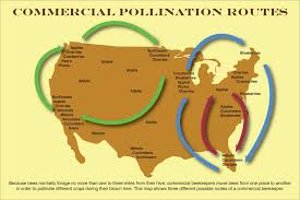 pollination routes