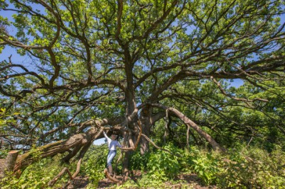 Wolf Oak photo 1