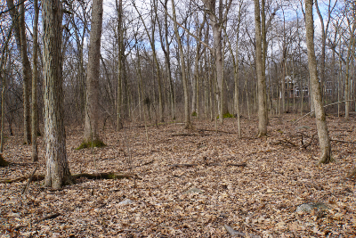 Leaf Litter and Woods small
