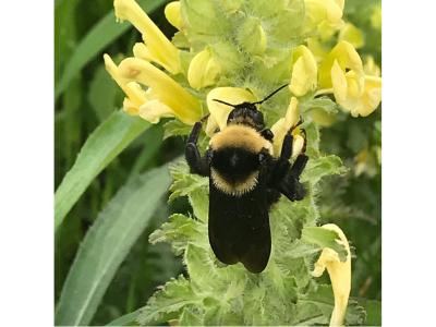 Bee 400 300